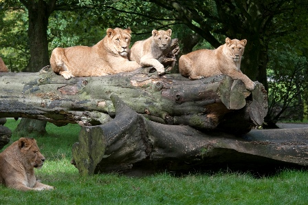 Knowsley Safari Park including Guided Safari Tour